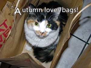 Our cat turns paper bags into cat toys.
