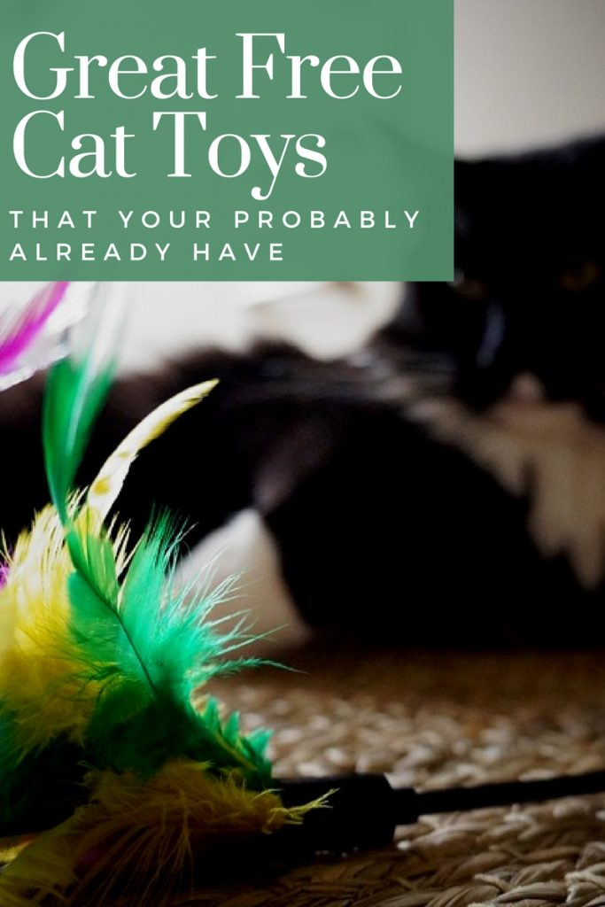 Playing with your cat strengthens bonding and keeps your cat active. Here are some great free cat toys you probably already own.