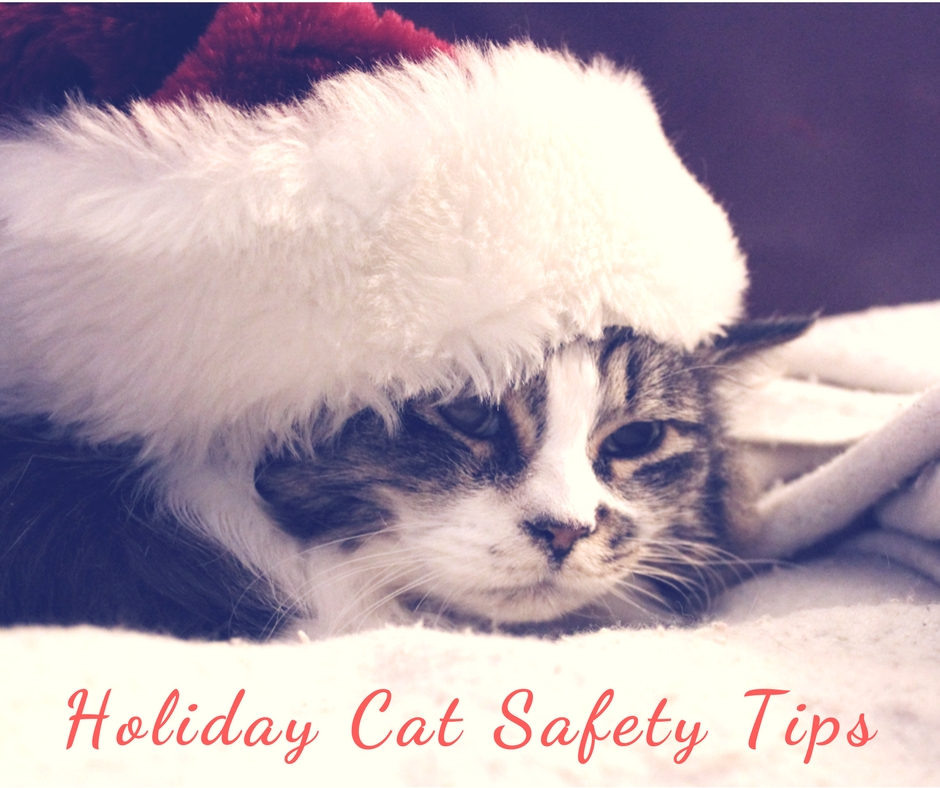 Holiday cat safety tips - Tips to keep your cats safe around the holidays